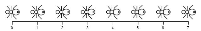 ants3.jpg